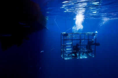 Western Cape Shark Cage Diving